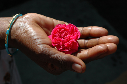 DSC_0239_India_ rose for a garland